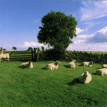 The KLF - Chill Out 1990 Beste LP's en Albums