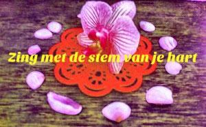 Zingen Vrouwen Limburg Zangles Workshop Cursus